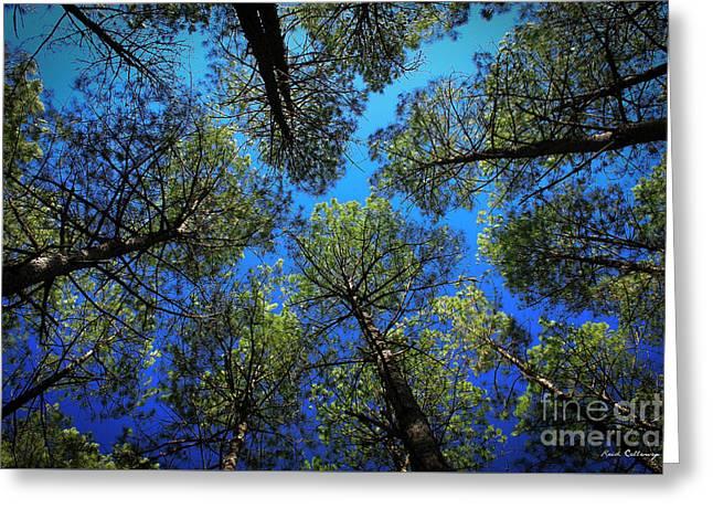 Look Up 3 Tall Pine Tree Art Greeting Card