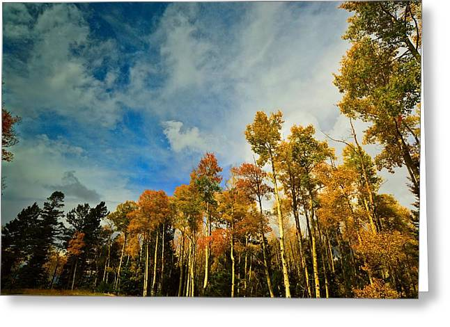 Look Up Greeting Card by Laura Ragland