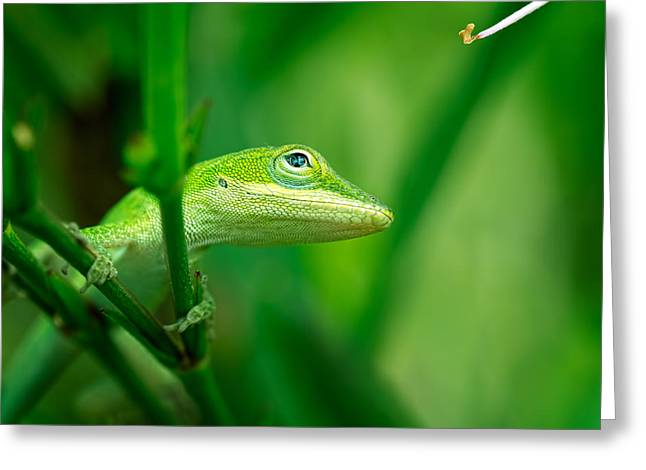 Look Up Lizard Greeting Card