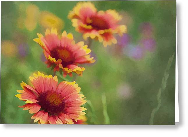 Greeting Card featuring the photograph Look...a Flower by John Crothers