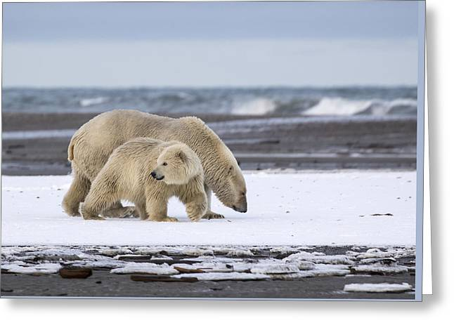 Looking Back In The Arctic Greeting Card