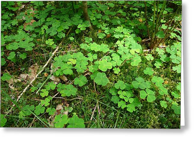 Looking For A Four-leaf Clover Greeting Card by Valerie Ornstein