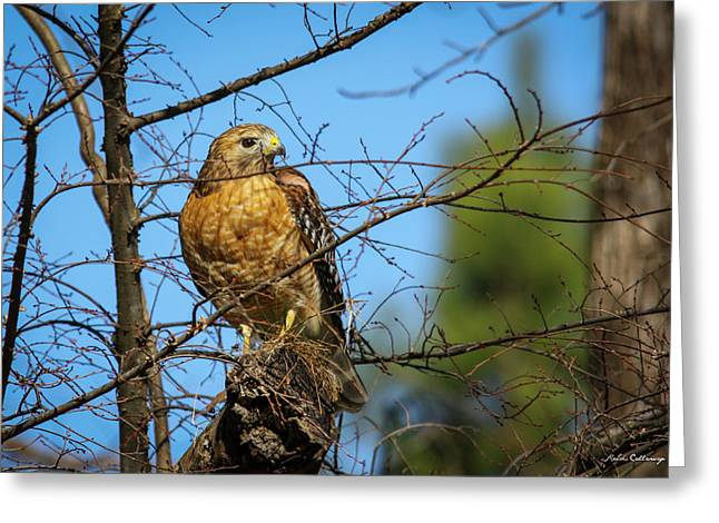 Looking For Danger Coopers Hawk Art Greeting Card