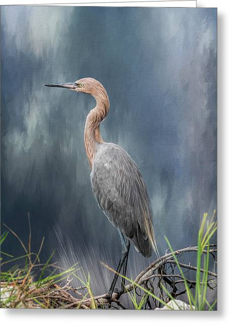 Greeting Card featuring the photograph Looking For Food by Kim Hojnacki