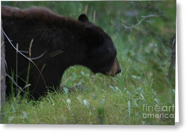 Looking For Lunch Greeting Card by Robert Torkomian