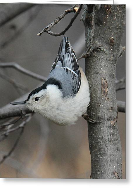 Looking For Seeds Greeting Card by Doris Potter