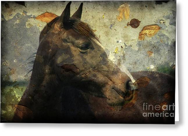 Looking I Fall For You Greeting Card