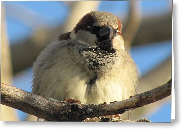 Looking Over The Nest Greeting Card by Lisa Jayne Konopka