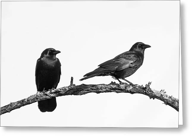 Looking Right Two Black Crows On White Square Greeting Card by Terry DeLuco