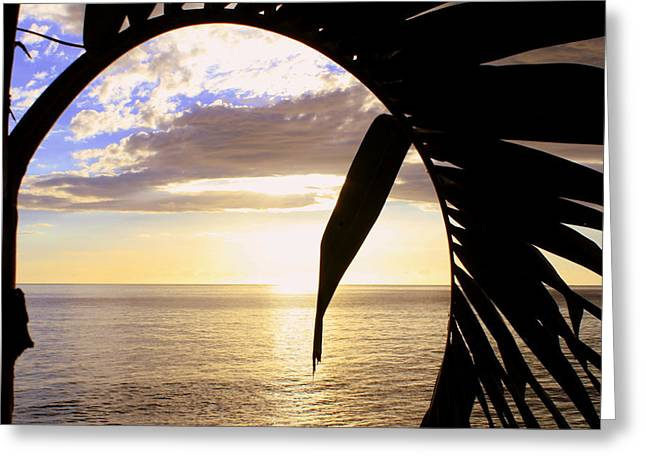 Looking Through The Palm Tree Window Greeting Card