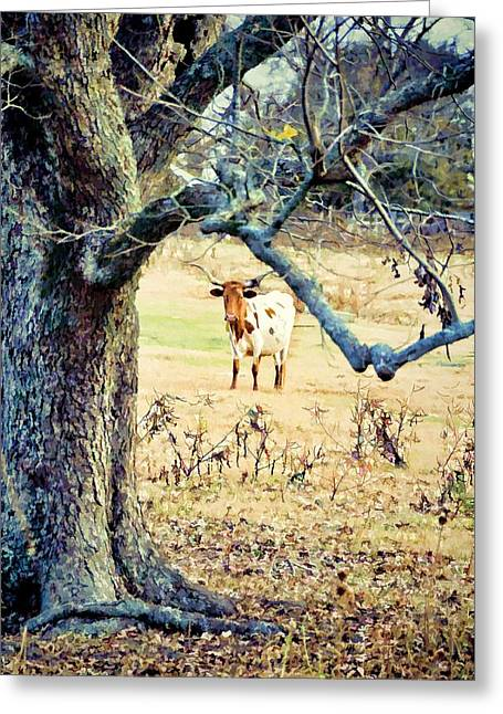 Looking Thru The Old Pecan Greeting Card by Jan Amiss Photography