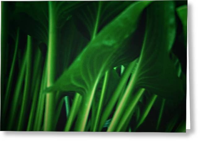 Looking Under A Hosta Plant Greeting Card