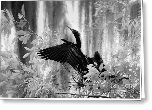 Looking Up, Black And White Greeting Card by Liesl Walsh