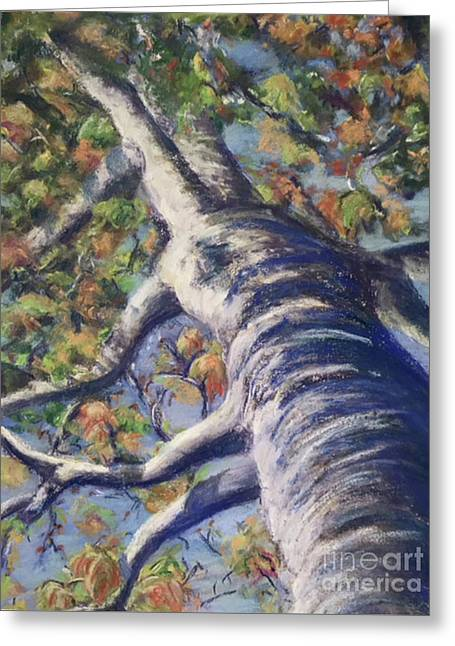 Looking Up - Fall Greeting Card