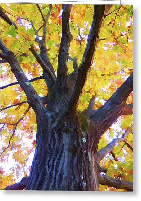 Looking Up From Under The Tree  1 Greeting Card by Lanjee Chee
