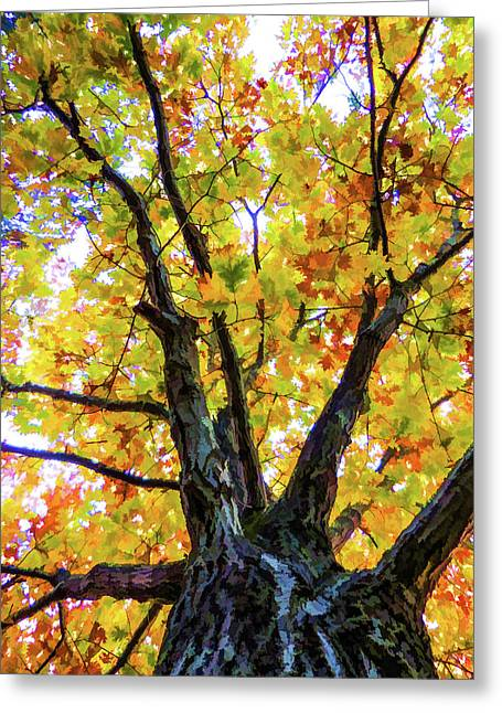 Looking Up From Under The Tree  2 Greeting Card by Lanjee Chee