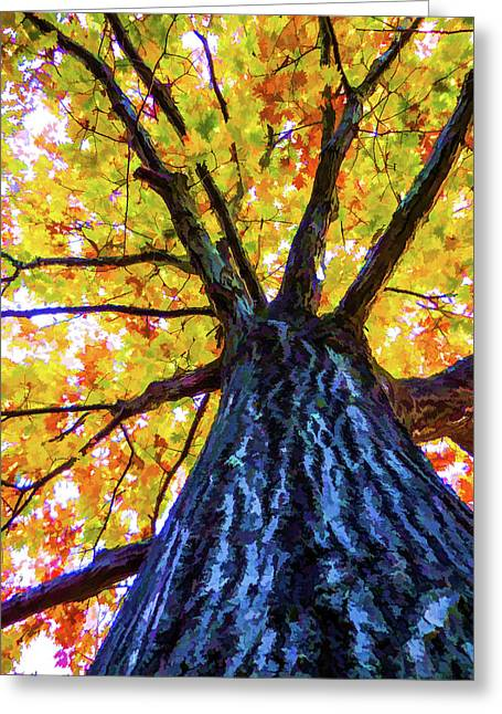 Looking Up From Under The Tree  3 Greeting Card by Lanjee Chee