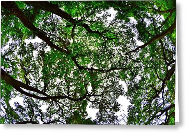 Looking Up The Oaks Greeting Card