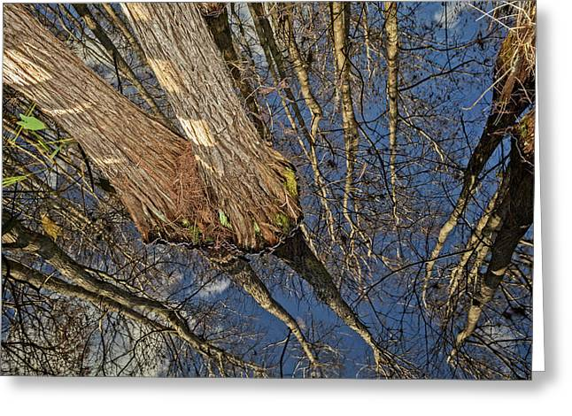 Greeting Card featuring the photograph Looking Up While Looking Down by Debra and Dave Vanderlaan