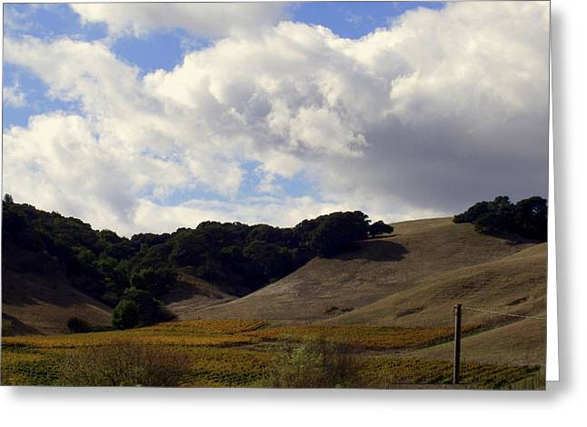 Sonoma Valley Greeting Cards - Looming Field of Sonoma Greeting Card by Deborah  Crew-Johnson