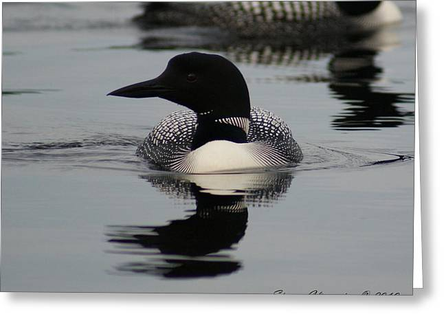 Loon 2 Greeting Card