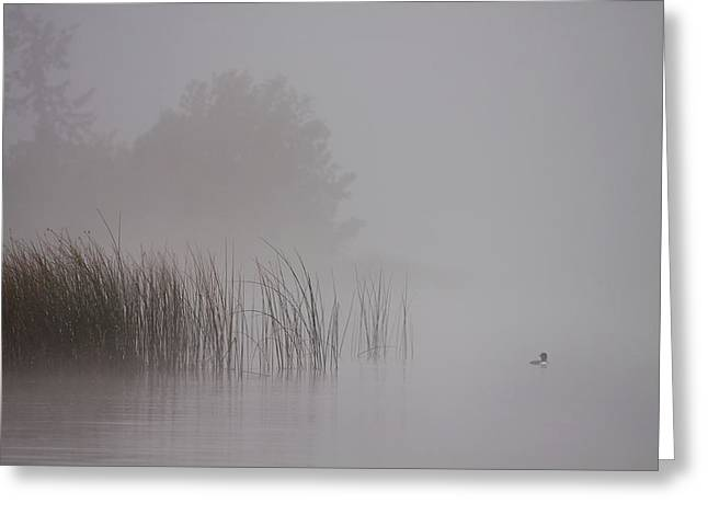 Loon In Morning Fog Greeting Card by Naman Imagery