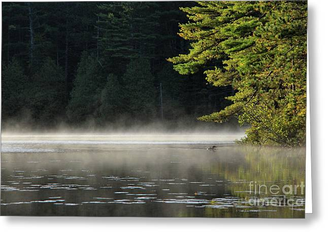 Loon On Rocky Pond, Baxter State Park Greeting Card by Sandra Huston