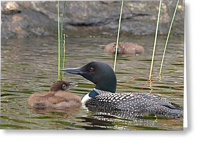 Loon Time Greeting Card