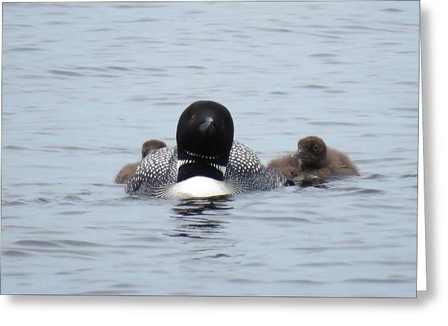 Greeting Card featuring the photograph Loon With Chicks by Sandra LaFaut