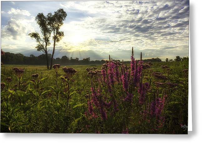 Loosestrife Greeting Card