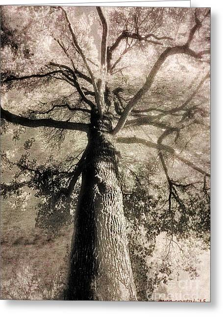 Lord Of The Trees... Greeting Card