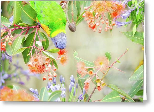 Lorikeet And Flowers Greeting Card by Margaret Goodwin