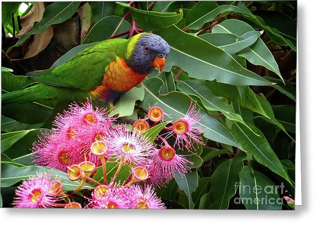 Greeting Card featuring the photograph Lorikeet by Fran Woods