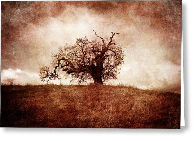 Lost And Wandering Greeting Card by Laura Iverson