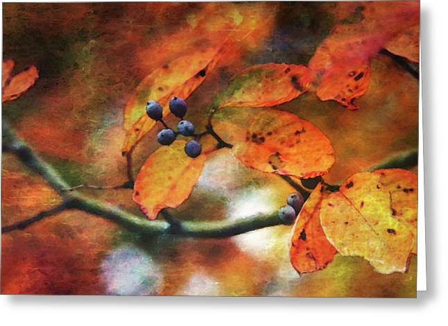 Lost Autumns Beauty 6570 Ldp_2 Greeting Card