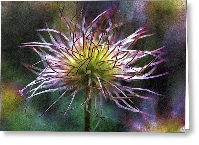 Lost Blooms Of A Pasqueflower Greeting Card