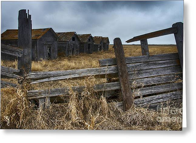Lost In Time 8 Greeting Card by Bob Christopher