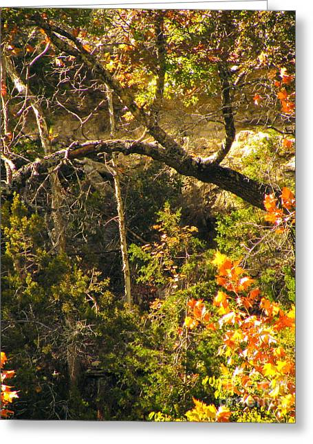 Lost Maples Scenery Greeting Card