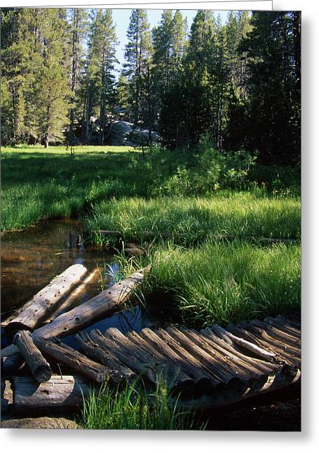 Lost Trout Creek Greeting Card by Soli Deo Gloria Wilderness And Wildlife Photography