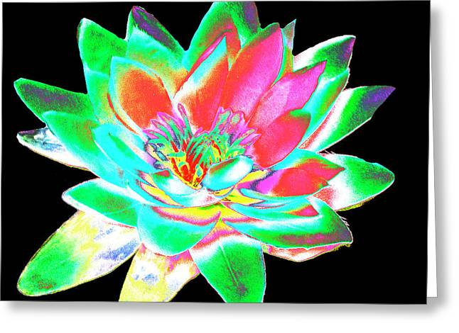Lotus 4 Greeting Card by Ann Tracy