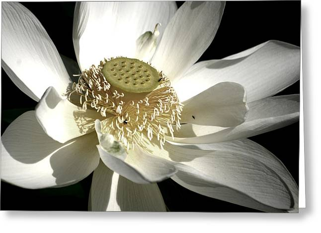 Greeting Card featuring the photograph Lotus 8514ds by Brian Gryphon