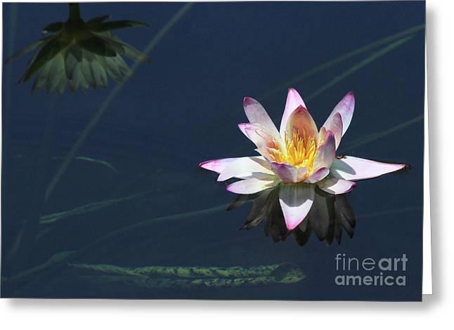 Lotus And Reflection Greeting Card
