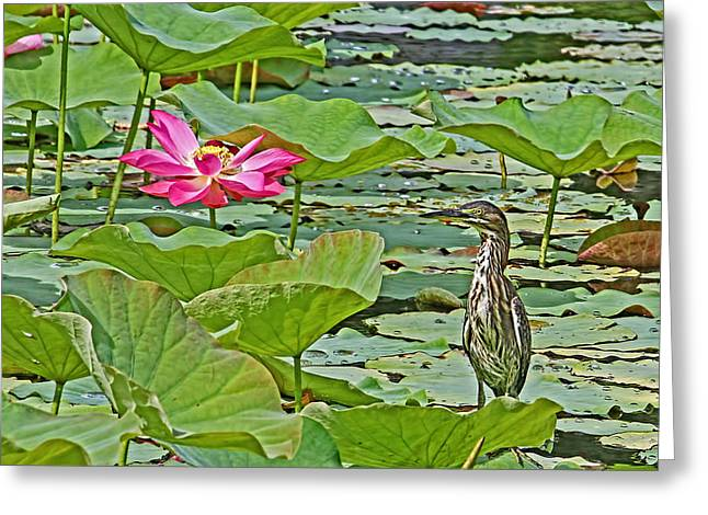 Lotus Blossom And Heron Greeting Card