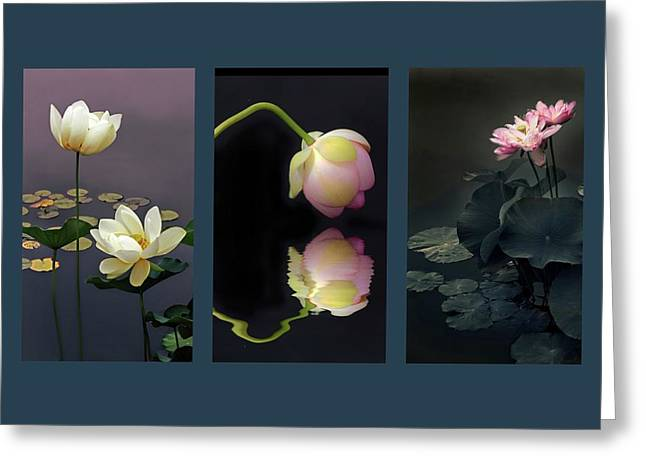 Lotus Blossom Triptych Greeting Card by Jessica Jenney