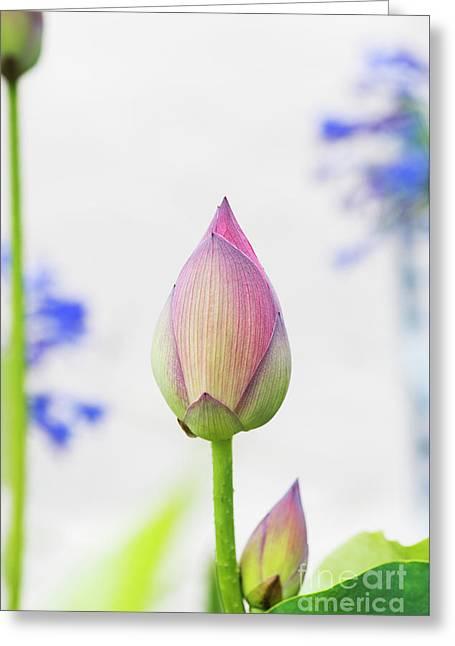 Lotus Bud Greeting Card