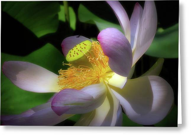 Lotus By Moonlight Greeting Card