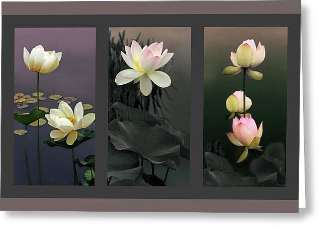 Lotus Collection II Greeting Card by Jessica Jenney