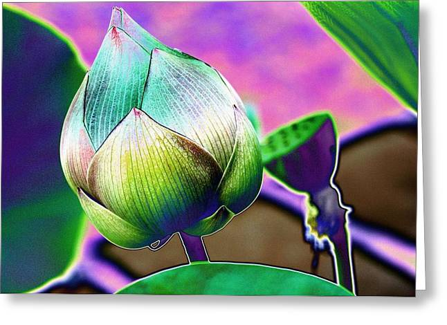 Lotus Dreaming 8 Greeting Card