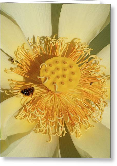 Greeting Card featuring the photograph Lotus Flower by Carolyn Dalessandro