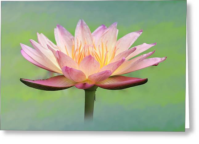 Lotus Flower Greeting Card by Lori Deiter